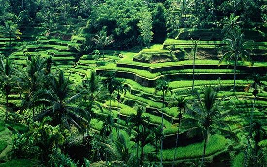 魅力印尼 活色生香的千岛之国(图)