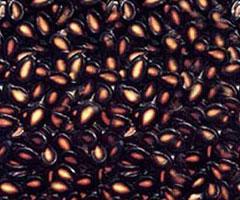 兰州特产推荐黑瓜子