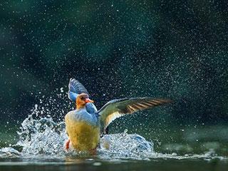 金江豚国际自然摄影公益大赛|VOL.7