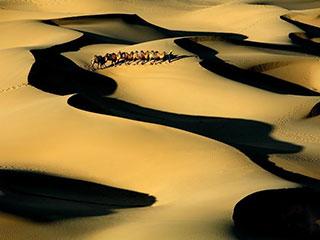 巴丹吉林――充满生机的沙漠
