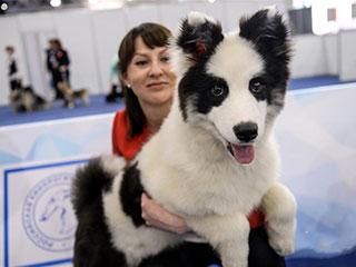 莫斯科国际宠物犬展