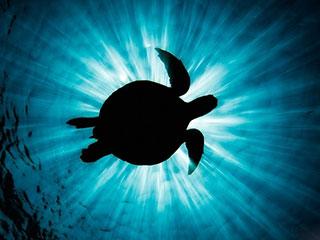 金江豚国际自然摄影公益大赛|VOL.11