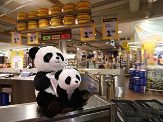 """荷兰小城掀起""""熊猫热"""""""