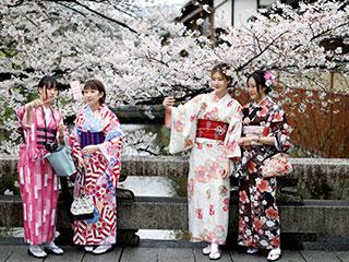 日本樱花烂漫 游客穿和服流连花海