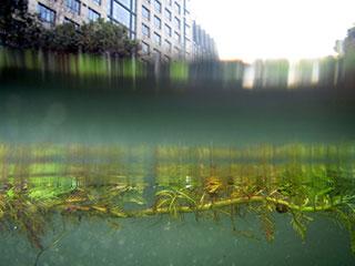 杭州西湖区治出水下美丽新世界
