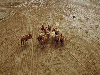 丝路上的养驼带头人