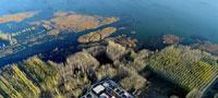 天津:水库防护林美景如画