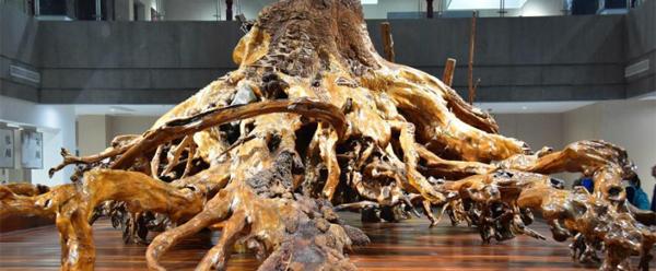巨型柳木根雕引围观 雕刻《桃花源记》