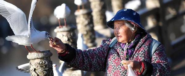 """88岁老人自制红嘴鸥""""窝窝头""""坚持喂食30多年"""