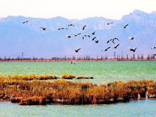 万物苏醒拥抱春光―宁夏沙湖3月免费观鸟