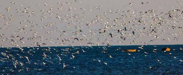 醉在青岛――海风翻动的是大海瑰丽的诗章