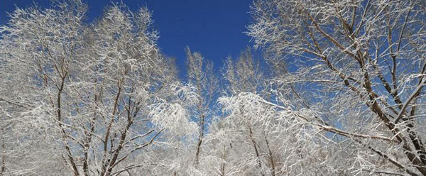 沈阳雪后天晴景色美丽 吸引民众观赏拍照