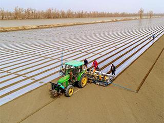 新疆塔里木:棉花播种忙