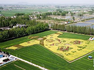 """南京:大地景观""""锦绣龙袍""""亮相"""