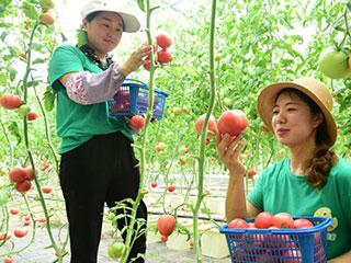 浙江建德:无土栽培绿色蔬菜