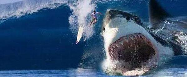 电影《巨齿鲨》发布最新海报