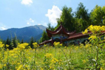 新疆佛山国家森林公园待普僧景区醉人风光吸引游客