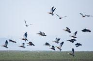 湿地成候鸟乐园