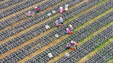 广西富川:集体经济助增收