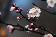 山东:春雨润花