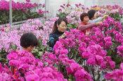 规模化花卉种植促就业