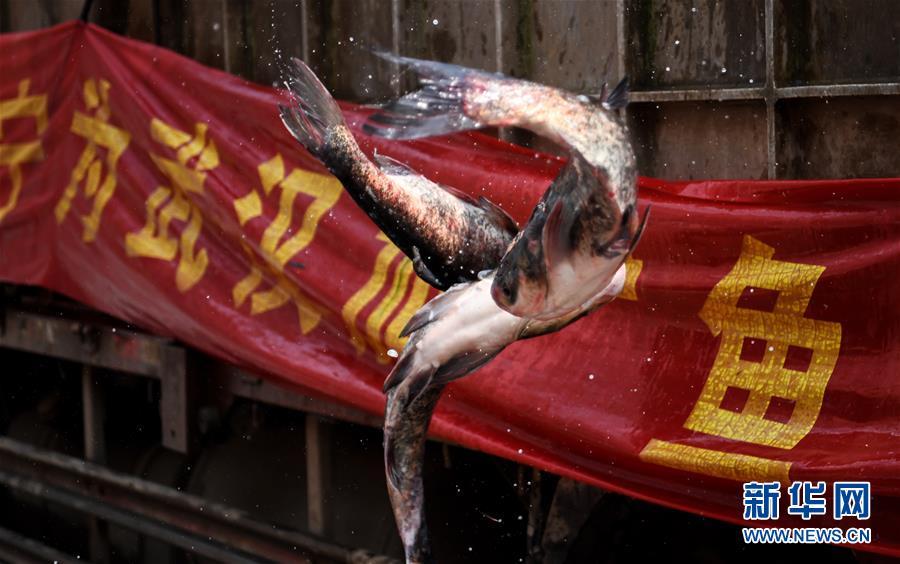 """20万斤鱼背后的""""爱心传递"""""""