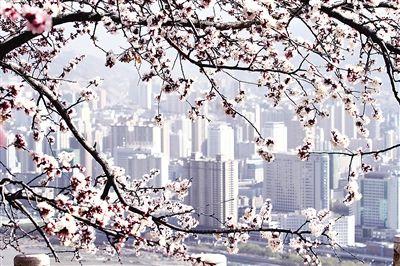 精致兰州丨春之伊始 万物萌动