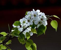 青海:春景引客来