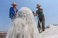 河北唐山:南堡盐场收获春盐