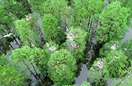 鸟类天堂池杉湖